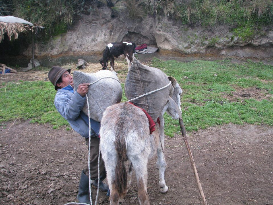 Baltazar has developed a clever method to load his donkey alone